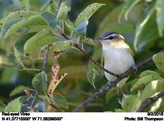 Red-eyed Vireo (Bill.Thompson) Tags: redeyedvireo vireoolivaceus ri birds