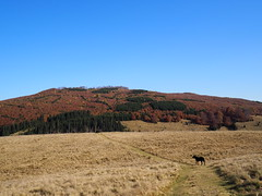 (> akela <) Tags: frakk forrásliget ősz
