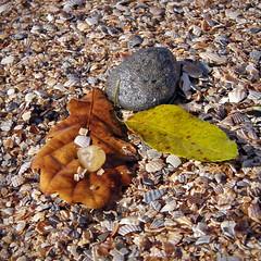 22903711 (aniaerm) Tags: sea coastalfinds sand