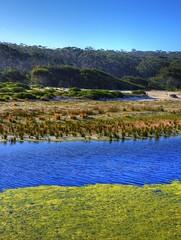 Forest and stream XI (elphweb) Tags: hdr highdynamicrange nsw australia forest bush tree trees wood woods spottedgum spottedgums spottedgumtrees waterway water stream creek weed algae