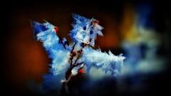The 'Iceman' cometh - after you !! (Bob's Digital Eye) Tags: bobsdigitaleye bokeh canon depthoffield ef50mmf18ii flicker flickr frost hoarefrost icecrystals macro smileonsaturday spooktacular t3i winter wintercolour winterinmn