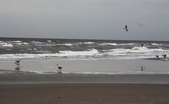 Nordsee (♥ ♥ ♥ flickrsprotte♥ ♥ ♥) Tags: watt nordsee wellen natur flut möwen flickrsprotte schleswigholstein