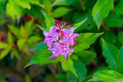 Flower in Blue garden in Seoul Guro 1 (Tachial) Tags: fe carlzeiss lce7rm3 sony fullframe flower sel55f18z a7r3 55mm 구로구 서울특별시 대한민국 kr