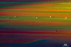 Castelluccio di Norcia (Abulafia82) Tags: pentax pentaxk5 k5 ricoh ricohimaging 2018 castellucciodinorcia umbria italia italy fiorita fioritura flowering colore colors color colori acolori fiori cielo montagna