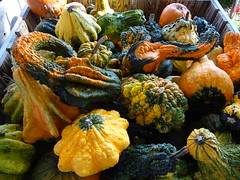 DSC07697 (kurmanstaff) Tags: kurmanphotography halloween dusselfarm kentohhalloween halloween2018 pumpkinsandsquash outdoorfestival