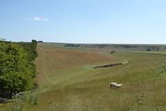 Behold!  A huge pile of dung! (Bods) Tags: yorkshirewoldsway gantontofileywalk northyorkshire flixtonwold walk yorkshirewoldswayday5