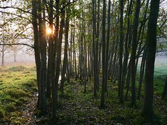 Early Morning Walk in the Forest (docwiththecamera) Tags: sunrise sunstar colors autumn mist fog morning beautiful fall