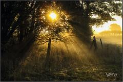 The Season With The Long Shadows. (Picture post.) Tags: landscape nature green mist trees shadows sunrise sunburst fence paysage arbre brume autumn morning morningsun