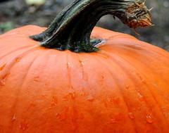 Happy Halloween (S.E.A. Photography) Tags: halloween pumpkin orange october fall autumn rain raindrops