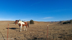 Pinto 1 (lorinleecary) Tags: harmony trees blue field posts sky barbedwire shadows pinto centralcoastcalifornia clouds