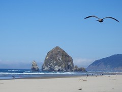 Haystack Rock and Young Gull (Linda, enjoying fall) Tags: beach bird gull ocean oregon rock sky