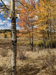 September 26, 2018 - A gorgeous fall scene at Kenosha Pass. (Leigh Caitlin)