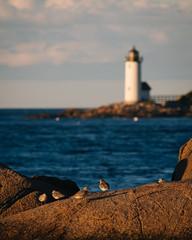 Wingaersheek Beach Sunset (gabe.mirasol) Tags: nikon d800e seascape ocean massachusetts mass new england sunset water seaside coast 400mm soligor vsco