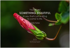 Marie Forleo You've got something beautiful in you that's just waiting to come to life (symphony of love) Tags: marieforleo believeinyourself believe believeinyou picturequoteonbelieveinyourself quoteonbelievinginyourself symphonyoflove sol omrekindlingthelightwithin om quotation quote quoteoftheday quotetoliveby quotes qotd inspirationalquote inspirational inspiringquotes inspiration motivationalquotes motivatingquotes motivation dailymotivation dailyinspiration dailyquote potd picturequote picture pictureoftheday pictures