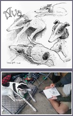 Ava (gnyp) Tags: sketching sketch dog dogs greyhound greyhounds gnyp