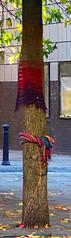 Knit Bombed Tree on Bold Street, Liverpool, England (teresue) Tags: 2017 uk unitedkingdom greatbritainengland merseyside liverpool boldstreet publicart knitbomb knitting bookmark ropewalksquare