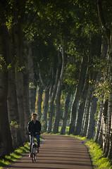 October Bicycle Commute 2 of 4 (beeldmark) Tags: weg nederland provincieutrecht woonwerk landschap fiets latemiddag thenetherlands オランダ commute landscape netherlands road bicycle cycling earlyevening fietsen lateafternoon vroegeavond bunnik utrecht nl beeldmark pentax k5 smcpentaxdal55300mmf458ed smcpda55300mmf458ed marsdijk