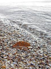 39875511 (aniaerm) Tags: sea coastalfinds sand