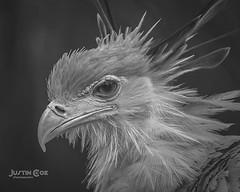 secretary bird #bird #birdsofinstagram #birds #parrot #birdstagram #birdwatching #instabird #birdphotography #birding #instabirds #cockatiel #wildlife #parakeet #parrots #your_best_birds #bestbirdshots #wildlifephotography #nuts_about_birds #budgie #kings (justin.photo.coe) Tags: ifttt instagram secretary bird birdsofinstagram birds parrot birdstagram birdwatching instabird birdphotography birding instabirds cockatiel wildlife parakeet parrots yourbestbirds bestbirdshots wildlifephotography nutsaboutbirds budgie kingsbirds parrotsofinstagram birdlover birdlovers featherperfection birdfreaks justinphotocoe