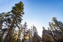 BareIslandLakeTrees8Sept1-18 (divindk) Tags: bareislandlake california maderacounty sierranationalforest backpacking camping lake quiet reflection serene sunrays sunset sunshine treetop trees