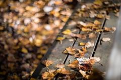 autumn bench (paconline) Tags: pacogsuarez paconline canoneos5dmarkiv autumn helios40285mmf15 bokeh prime manuallens russianlens dof banco bench