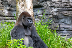 Kilimanjaro Safaris (myfrozenlife) Tags: orlando kilimanjaro animalkingdom vacation canon5d holiday florida canon disneyworld waltdisneyworld travel nature kilimanjarosafaris aerialphotos trip zoo usa unitedstates safaris america kissimmee us