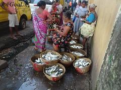 Wholesale fish market (joegoauk73) Tags: joegoauk goa fish market wholesale road panjim panaji