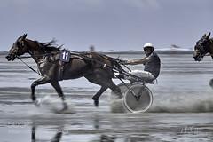 full speed ahead (KevinBJensen) Tags: horse horses equestrian sport animals sea beach mudflat panning action power bokeh seaside ocean trotter race racing man sky blue water sand sun summer mud dirt speed wheels face chaser