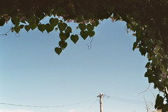 hearts (Vinzent M) Tags: ishigaki 石垣 japan 日本 leica r r4 agfa vista zniv summicron 50