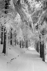 Winter is coming / Zima nadchodzi (Piotr Skiba) Tags: beskidy beskid żywiecki winter path landscape bw monochrome trees forest snow kodaktmax100 poland pl piotrskiba film eos