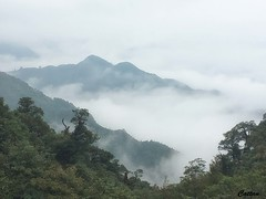 Mangshan national park 莽山国家森林公园、湖南