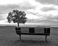 IMG_7055a / enjoy the view (rudyschnick) Tags: bench trees monochrome bnw sky clouds grass