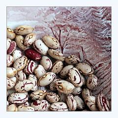 Borlotti beans (overthemoon) Tags: macromondays bfood borlotti beans alfredmeakin staffordshiredish 1982 themill square frame pink haricots bohnen endedupinsoup soakinginwater whichwrinkledtheskin 4 4inexploreithinkitsthehighestiveeverbeen orbean