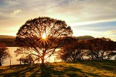 464A6115F (Cilmeri) Tags: sunsets sunbeams sun trawsfynyddlake trawsfynydd snowdonia eryri wales gwynedd autumn trees lakes landscapes