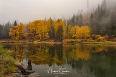 Wenatchee River V (NikonDigifan) Tags: autumn autumncolors fall fallcolors trees river wenatcheeriver tumwater fog mist reflections pnw pacificnorthwest cascades mountains nature nikond750 nikon28300 nikon mikegassphotography
