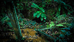 No.1 Slant / Water Culvert (_D4RK_) Tags: coal mining pit colliery drift mine iron industry heritage brynna wood level coallevel miners miner ironstone ore ocre