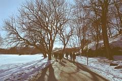 Gångvägen till södra husen i motljus (Linzen004) Tags: stockholmsuniversitet motljus träd