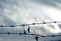L1021913c (haru__q) Tags: leica leitz leicam8 m8 xenon barbed wire barbedwire 有刺鉄線