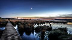Brackvenn - Marécageuse et tourbeuse (cedant1) Tags: brackvenn belgique belgium eupen fagnesest hautesfagnes fagnes tourbeux d750 calm night moon strange path germany border walk mystic water swampy marshy