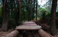 Hidden bridge to nowhere (Robbie E-M52) Tags: bridge forrest landscape trees wood olympus 1240 mft em5markii