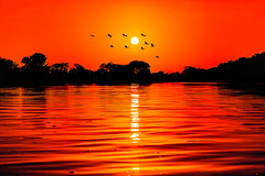 The magic of the sunrise. (Valter Patrial) Tags: birds birdwatching nature landscapes sunrise sun river red silhouettes