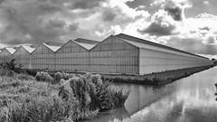 P1060585fxfd (hans hoeben) Tags: landscape amsterdamgreenhousesinbw amsterdam holland greenhouse amsterdams forest hans hoeben panasonic lx3 lumix sumcron leica black white schinkel