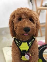Lola is Ginger's sweet girl
