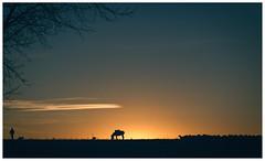 Punto muerto (una cierta mirada) Tags: landscape nature sun sunset donkey sheep shepherd flock outdoors sky cloud tree folk