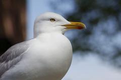 Seagull (expSDHQ) Tags: bird portrait view white 一隻鳥 seagull oiseau sigma quattro foveon x3 quattroh art