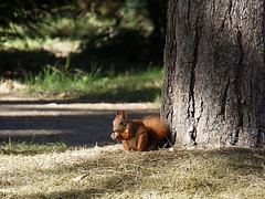 Schönes Wochenende! (ingrid eulenfan) Tags: park eichhörnchen squirrel tier animal sonye55210mm