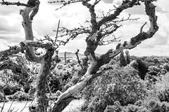 © Zoltan Papdi 2018-5929 (Papdi Zoltan Silvester) Tags: édimbourg réel rue vie gens humain voyage journalisme real street life people human trip journalism paysage vue pointdevue landscape view pointofview groupe group treetrunk tree woods forest fallen park treestump deadtree