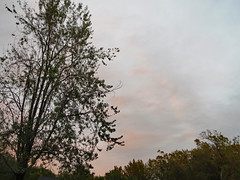 Trees And Evening Sky. (dccradio) Tags: lumberton nc northcarolina robesoncounty outdoor outdoors outside thursday evening autumn fall goodevening nature natural leaf leaves sky pinksky eveningsky tree trees treebranch branch branches treebranches foliage clouds treelimbs treelimb canon powershot elph 520hs