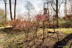 Petit bois (patoche21) Tags: amsterdam europe fleur flore nature paysbas photographie plante patrickbouchenard netherlands keukenhof garden park lisse