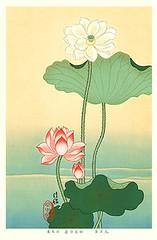 Sacred lotus (Japanese Flower and Bird Art) Tags: flower sacred lotus nelumbo nucifera nelumbonaceae modern woodblock print japan japanese art readercollection